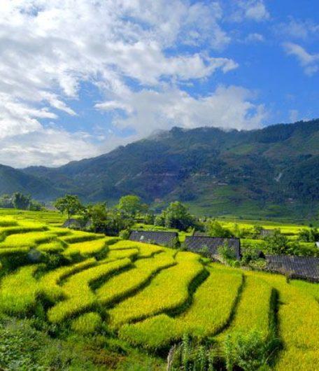 Cánh đồng lúa Nam Cang