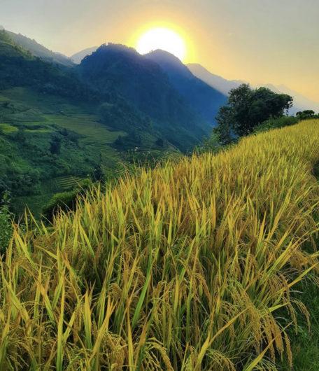Nam Cang Rice Terrace Hike