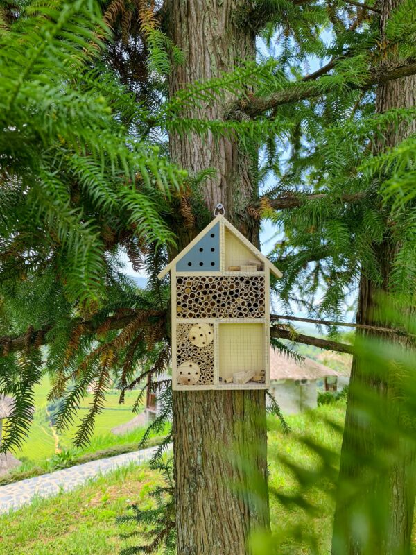 insect hotel 2